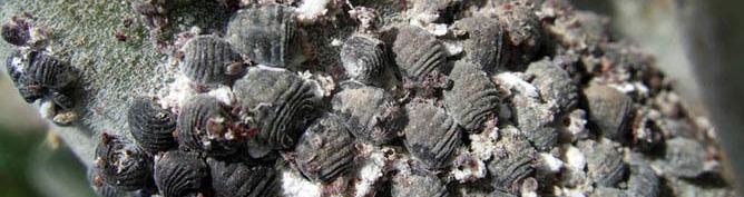 кармин производтво кармина png