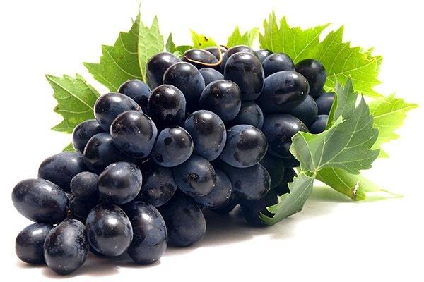виноград темный черный кисть грозди оптом купить на фоне