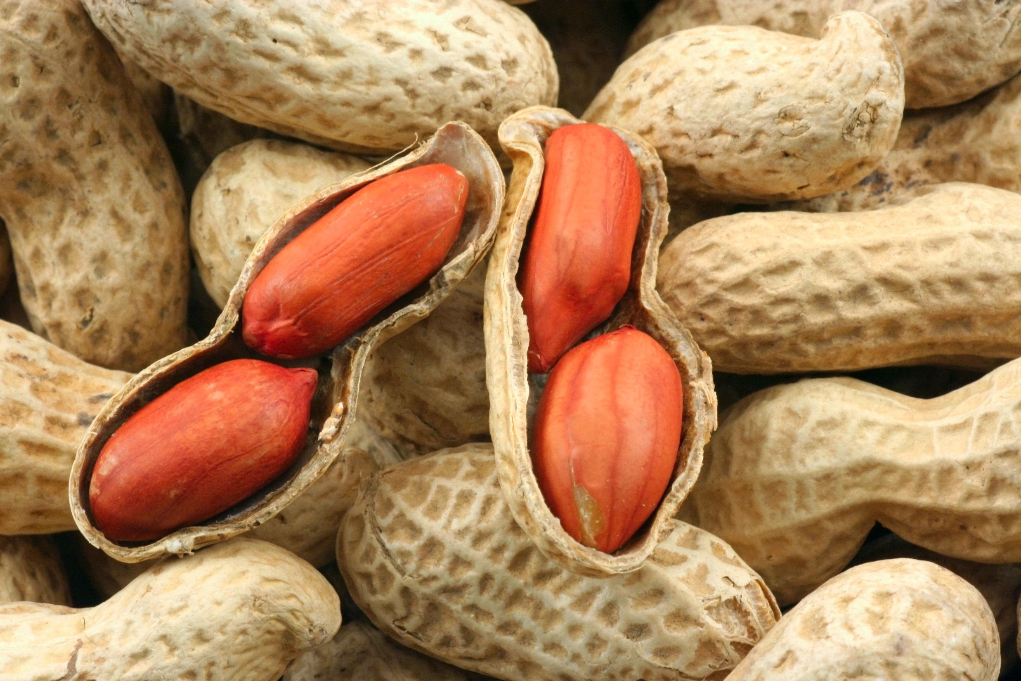 арахис орех hd высокое качество студия
