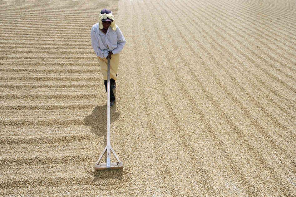 Обработка кофейных зерен