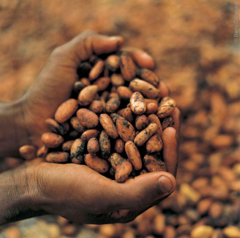 Специально созданные организации будут следить за товарооборотом какао в мире