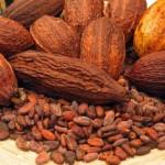 Обзор экспортируемого какао и какао продуктов за прошлогодний отчетный период
