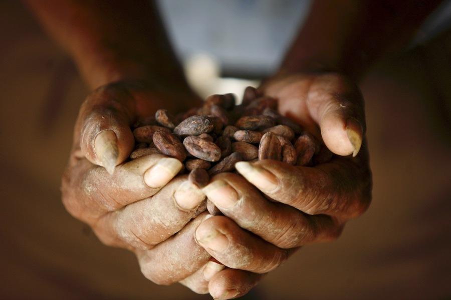 В ближайшие пять лет снизятся поставки какао-бобов на мировые рынки