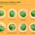Как правильно выбирать дыню или арбуз?